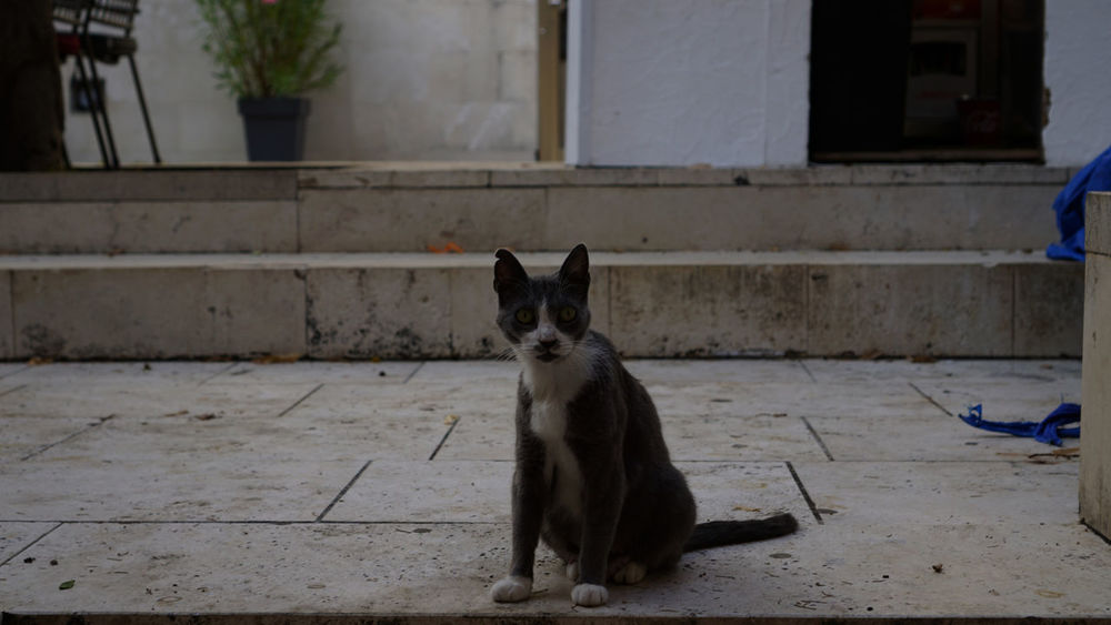 Animal Themes Architecture Built Structure Cat Day Domestic Animals Domestic Cat Feline Looking At Camera Mammal No People One Animal Outdoors Pets Portrait Sitting