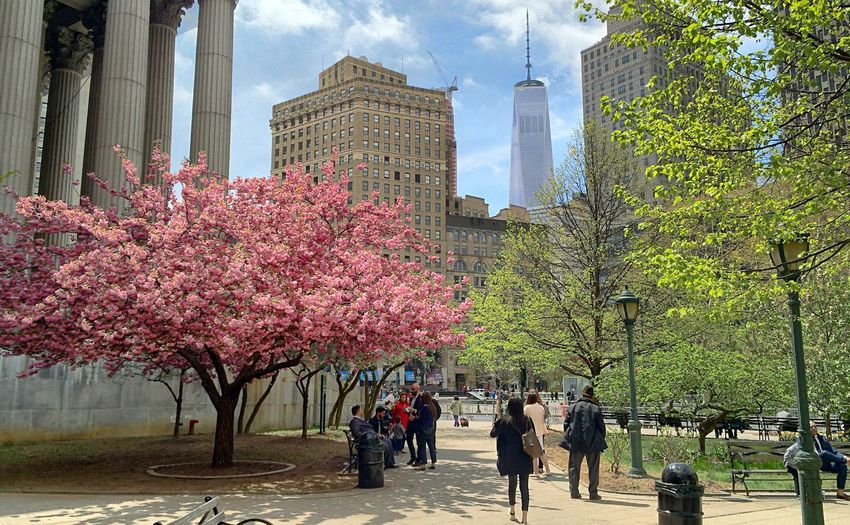 City Hall New York City on lunch from Juryduty Tadaa Community OpenEdit Urban Manhattan Cherryblossoms