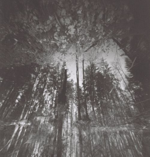 Mopinhole Film Photography Blackandwhite Bw_collection Filmphotography Film Blackandwhite Forest Pinhole Pinhole Tree Plant Forest Nature Day Growth No People Land Beauty In Nature Low Angle View Outdoors Winter Tranquility Cold Temperature Branch Non-urban Scene WoodLand Tranquil Scene Scenics - Nature Coniferous Tree
