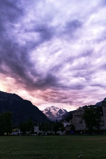 good morning Purple Purple Sky Eye4photography  Switzerland Berner Oberland Morning Light Bernese Oberland cityscapes Interlaken Jungfrau Tree Mountain Dramatic Sky Sky Landscape Mountain Range Grass
