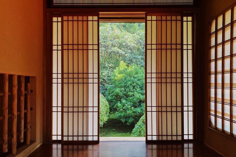 Plants seen through glass window of house