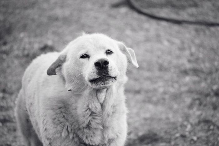 Meet my friend, speedy! Monochrome Cute Pets Nikon D3200 Litely
