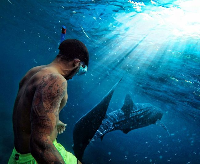 Man Swimming By Fish Undersea