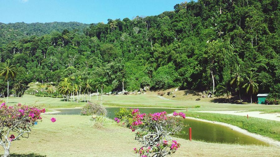 Green Gorgeous Park