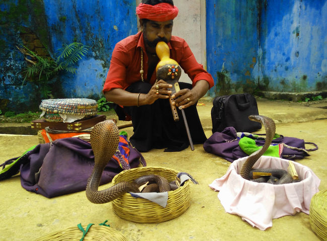 Basket Charmers India Travel Juggler Lute Red Shirt Snake Charmers Snake ♥