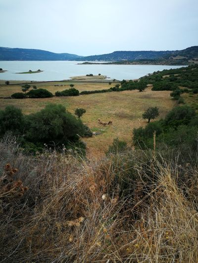 Lake Sardinia Sardegna Italy  Sardinia Sardegna Water Tree Sky Landscape Agricultural Field Calm