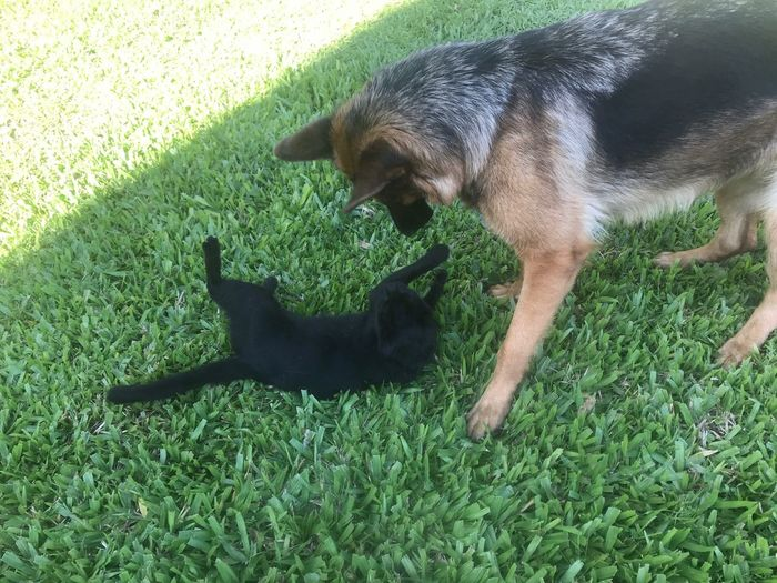 Cat and dog. Friends for ever Cat And Dog Playing Playing Dog Cat Animal Themes Animal Grass Mammal One Animal Pets Green Color Vertebrate Domestic Plant High Angle View Domestic Animals Nature No People Canine Dog Day Sunlight Land Field