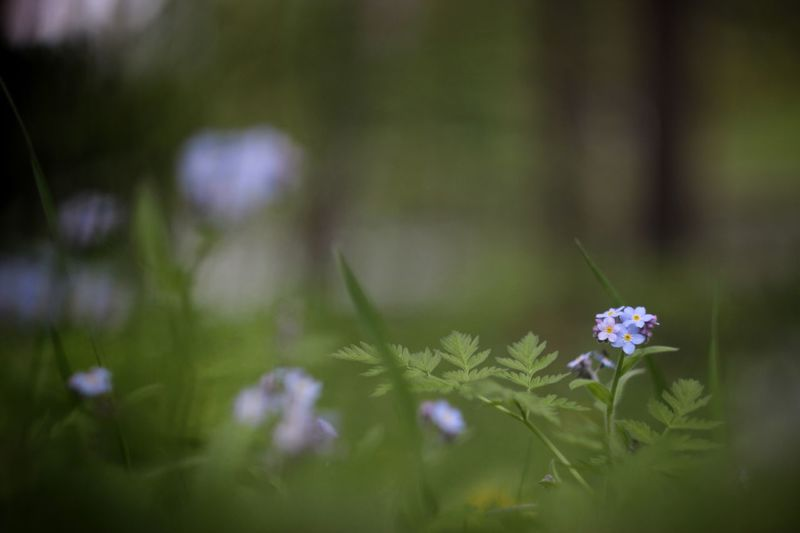 Summer is here Flower Nature Plant Fragility Growth Beauty In Nature Day No People Outdoors Freshness Close-up Blooming Flower Head Tranquil Scene Beauty In Nature Green Color Helios Grass Short Focus Flowers Freshness Bokeh Growth Scenics Helios 44-2