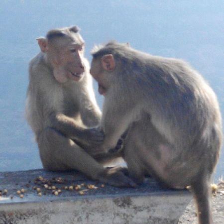 Monkeys Hand shake Sharing  Food
