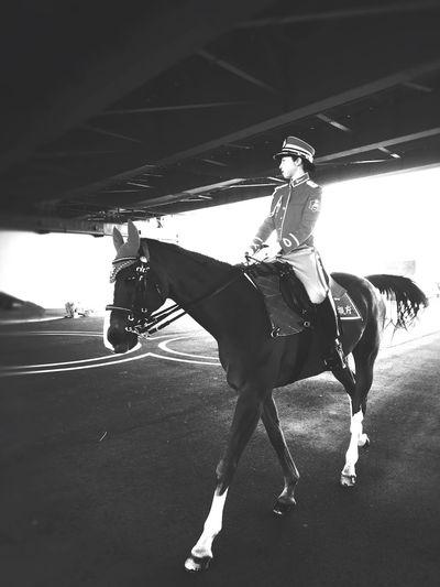 警視庁の騎馬隊。 Cavalry Police Cavalry Police Horse Police Japanese Police The Metropolitan Police Department Domestic Animals Animal Animal Themes One Animal Day Transportation Ride Sunlight Riding One Person