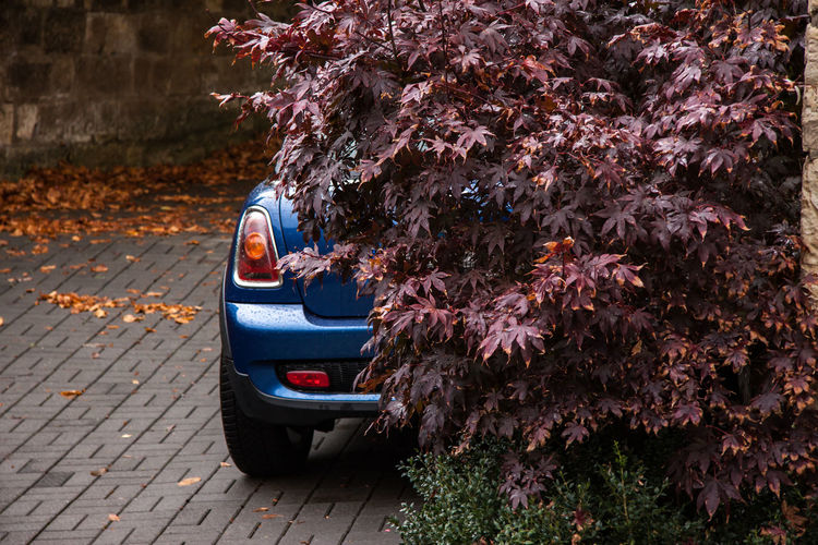 Car parked on street during autumn