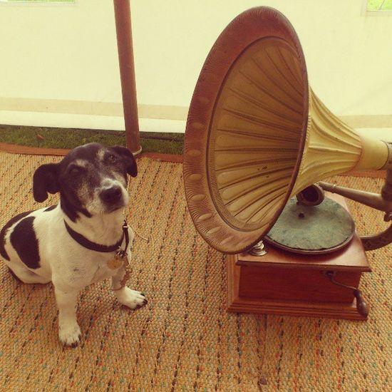 His master's voice. Dogs Dog Cute Hmv logo dogsofinstagram