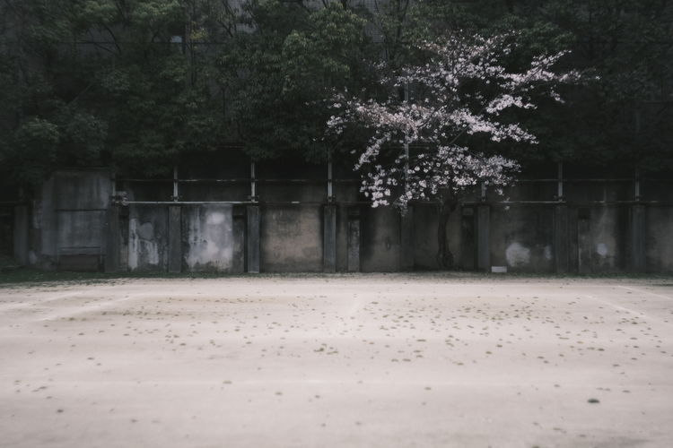 Trees and plants on field by building