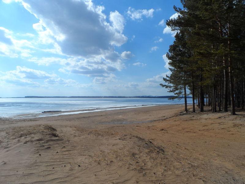 Золотые пески Иркутск сибирь пляж песок Лес