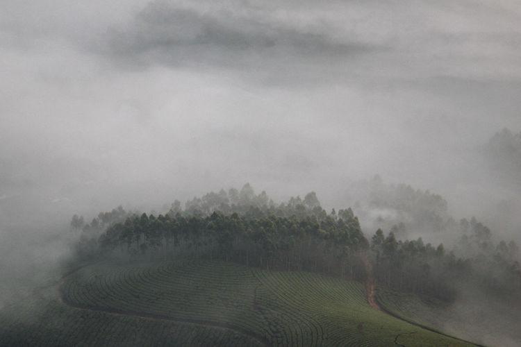 Mysterious view on tea plantation in Munnar, Kerala (India) Agriculture Beauty In Nature Birdsview Cloud - Sky Day Farm Field Fog Growth Kerala Landscape Nature No People Outdoors Rural Scene Scenics Sky Tea Crop Tea Plantation  Tranquil Scene Tranquility Tree EyeEmNewHere