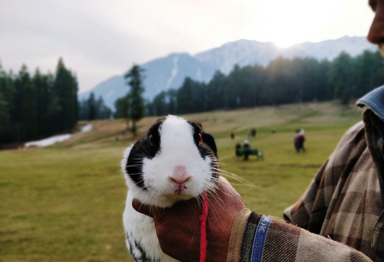 Close-up of rabbit on field against sky