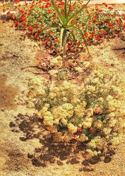 Deserty