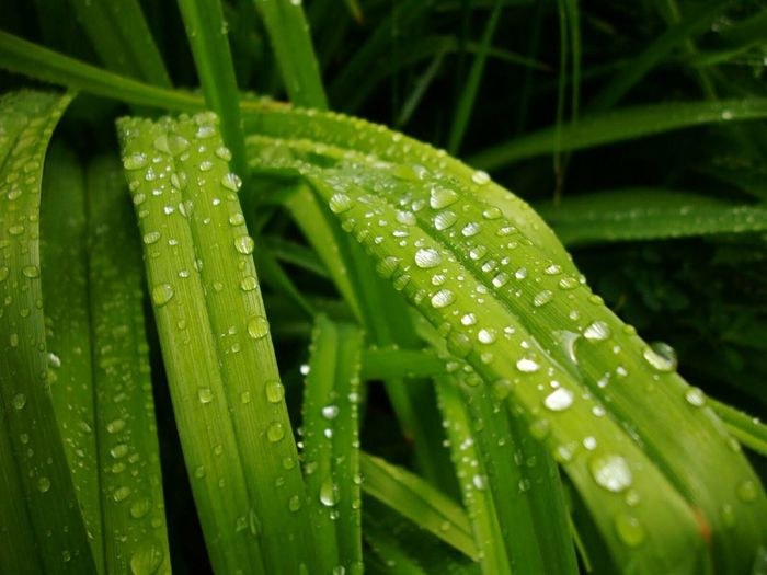 After the Rain Drop Green Color Water Wet Leaf Nature Growth Plant Close-up RainDrop Macro Photography Beauty In Nature Day Outdoors Watet Droplets Plant Leaf 🍂 No People