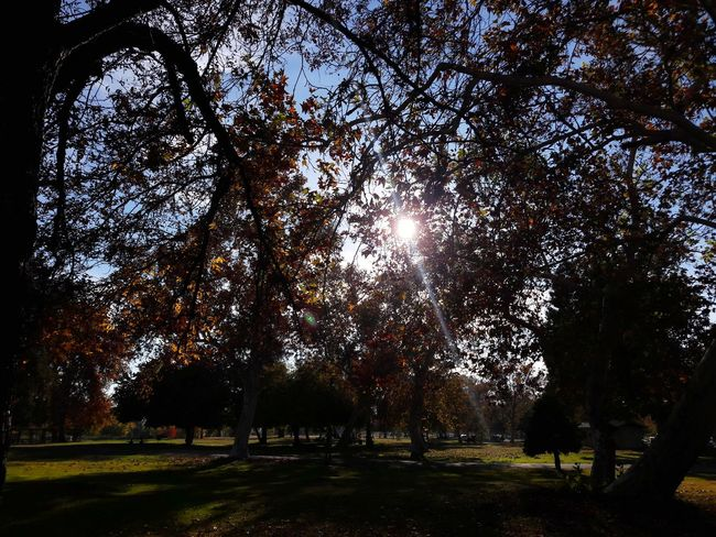 Sunny day at the park Tree Sky Tranquility Tranquil Scene Countryside Non-urban Scene Scenics Calm Growing