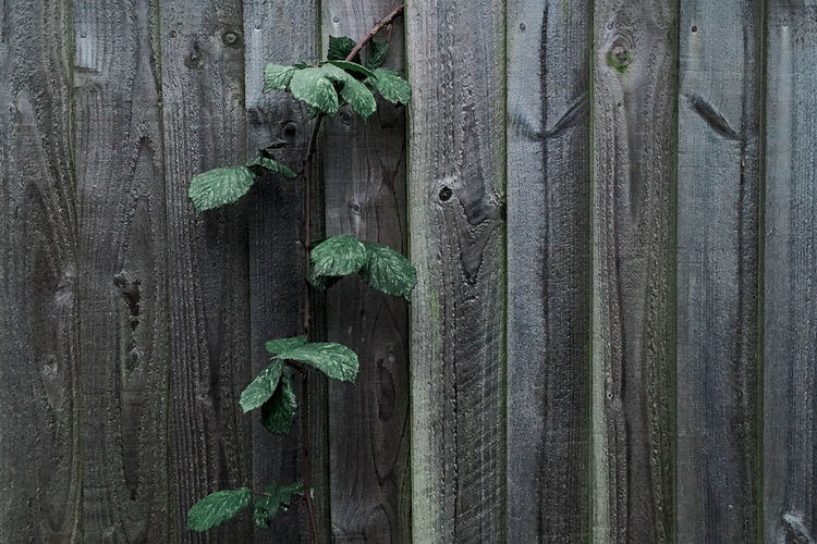 Backgrounds Close-up Green Color IPhoneography Leaves Nature No People Outdoors Plant Textured  Wood - Material