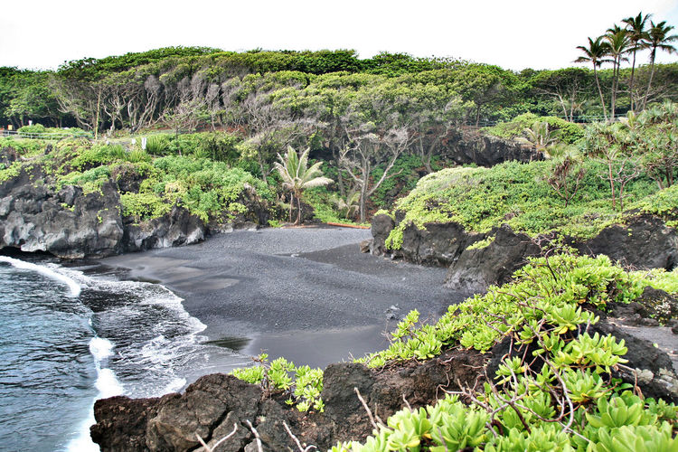Wai'anapanapa State Park Oahu Hawaii Nature Tree Green Color Water Landscape Beauty In Nature No People Scenics Outdoors Tranquil Scene Panoramic Travel Destinations Tourism Hawaiian Style Hawaii USA Travel Hawaii Life Vacations Beach Nature Beauty In Nature Blue