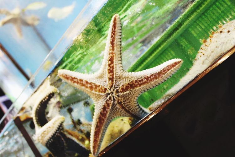 Starfish in the fish markets of Hong Kong One Animal No People Day Close-up High Angle View Animal Themes Nature Water