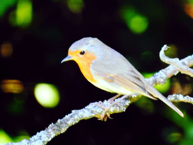 Animal Wildlife Bird Nature Vögelchen Vogel Close-up One Animal Perching No People Animals In The Wild Beauty In Nature Outdoors Branch Day Tree Animal Themes