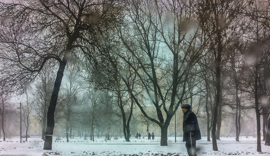 Urban trees 1 Saint Petersburg One Person Trees Street Winter