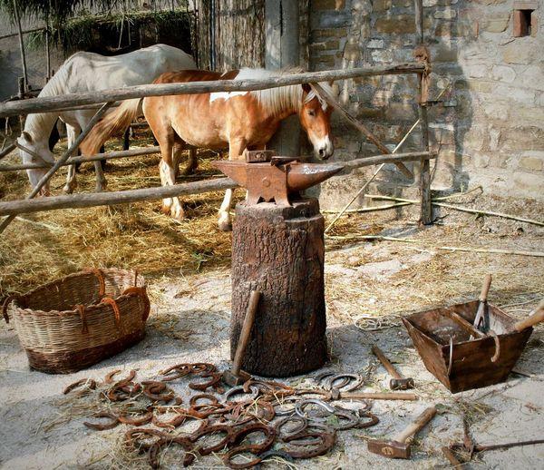 Cavalli Horses Mercato Delle Gaite Focus On The Story