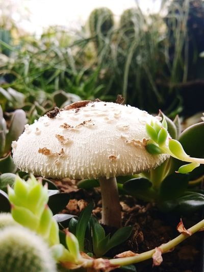 Fungus Mushroom Uncultivated Fly Agaric Mushroom Close-up Plant Plant Life In Bloom