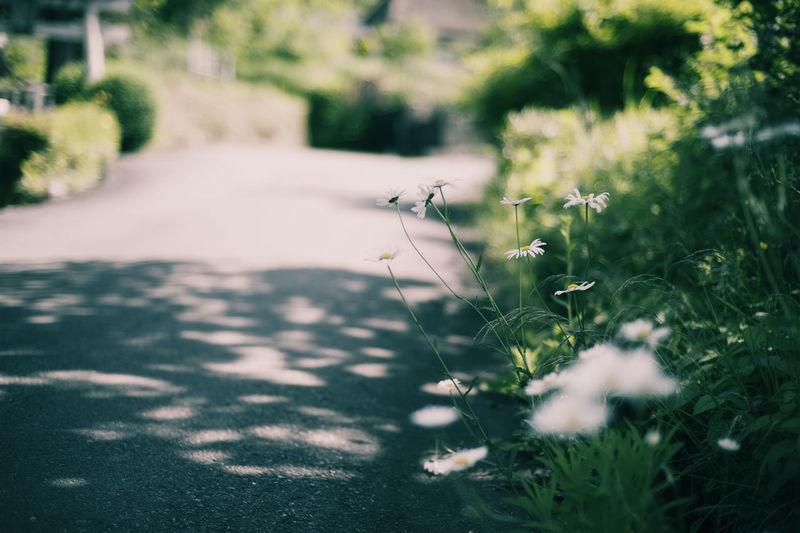 さりげないのも良いものです Street Photography Popular Photos Photography Kyoto かやぶきの里 EyeEm Nature Lover Flower Collection EyeEmBestPics Taking Pictures EyeEm Best Shots
