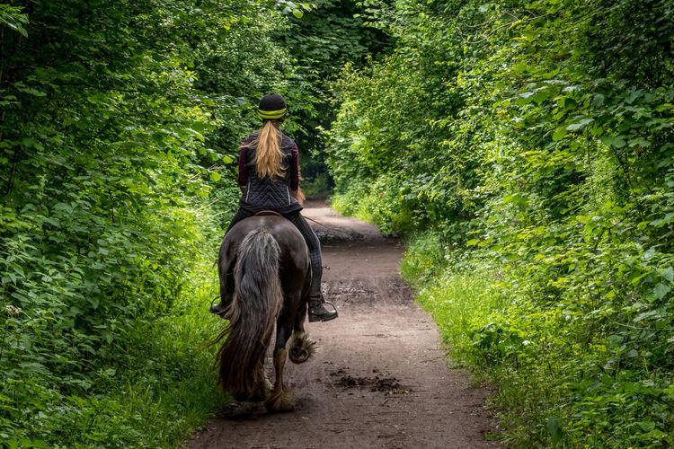 Horse Rider on