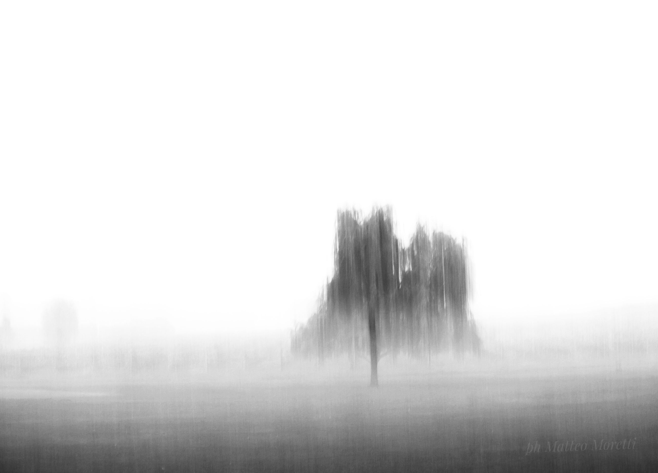 fog, sky, tranquility, tranquil scene, tree, beauty in nature, scenics - nature, no people, nature, environment, landscape, day, plant, land, copy space, field, non-urban scene, idyllic, outdoors, hazy