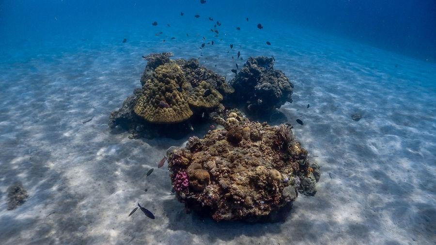 Shallow corals at pagkilatan