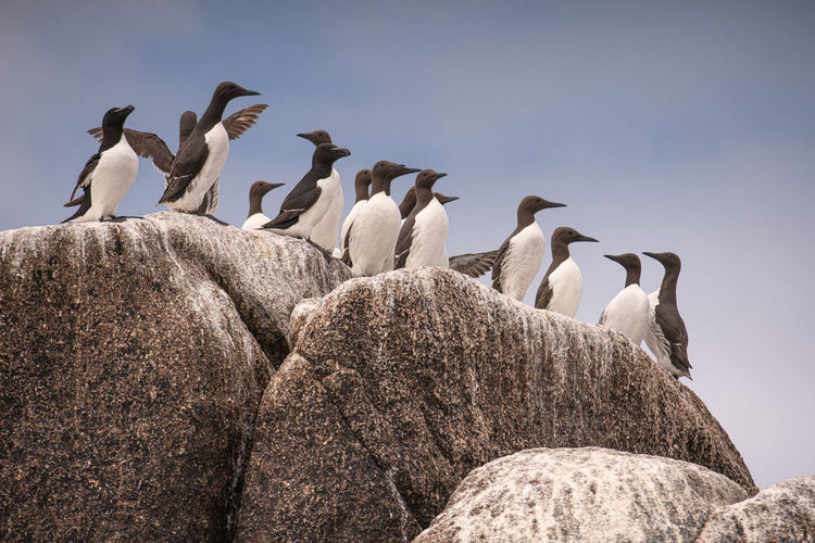 Flock of birds perching on rock