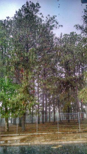 Chuva-Rain