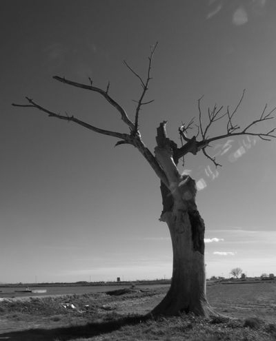 Cloud - Sky Dead Plant Nature No People Non-urban Scene Tranquil Scene Tranquility Monochrome Photography