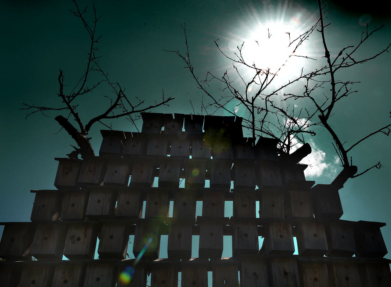 architecture, low angle view, building exterior, bare tree, built structure, branch, no people, outdoors, sky, tree, night