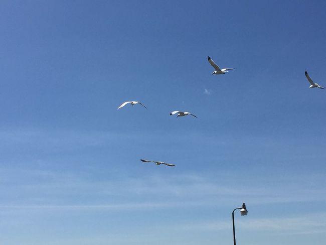 Flying Vertebrate Animal Wildlife Animal Themes Bird Animal Sky