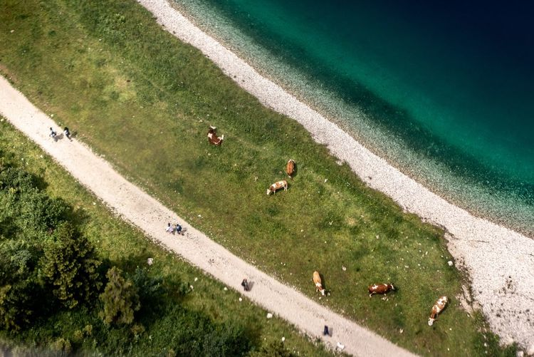 High angle view of horses on sea shore