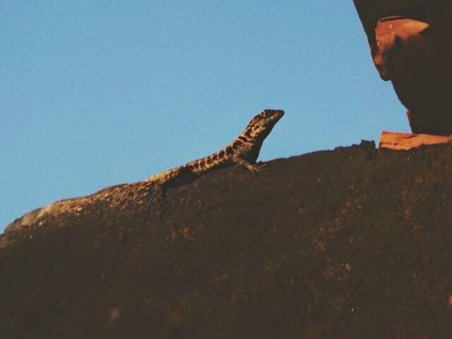 One Animal Animal Themes Reptile