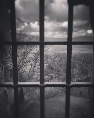 Bleak Close-up Cold Temperature Day Frosted Glass Indoors  Nature No People Sky Snow Tree Window Winter