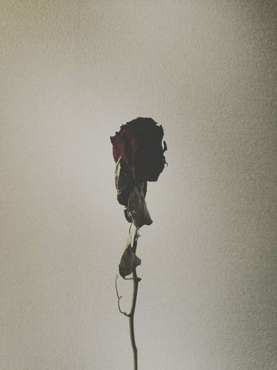 Iphonegraphy Photography Vscocam Iphone 6 Flower