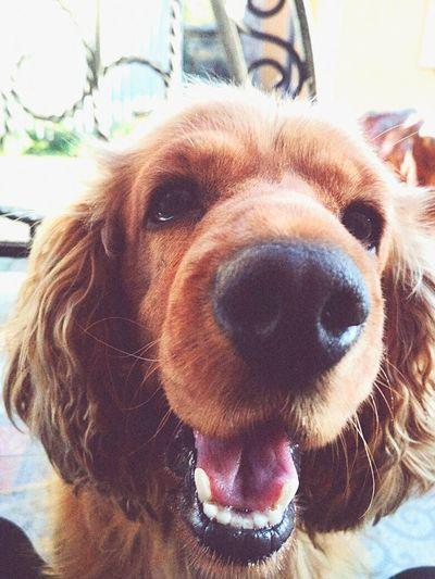 #my #dog #love