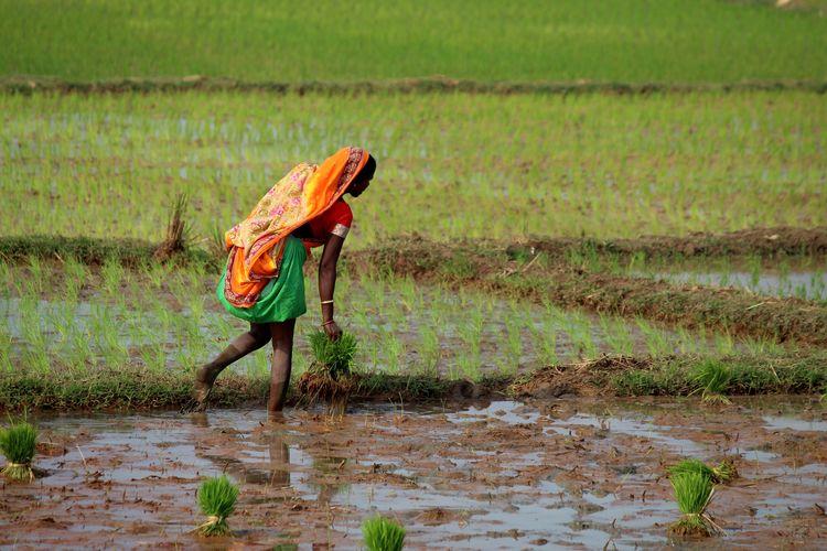 Man working on field
