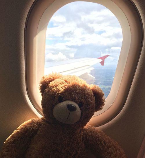 Teddy on plane Hanging Out That's Me Enjoying Life Teddybear Plane Airplane Flight ✈