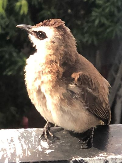When this little one posed for a picture 💜 Outside My Window Cute Mothernature Bird Vertebrate One Animal Animal Wildlife Animals In The Wild Perching Focus On Foreground Close-up Nature Outdoors Side View