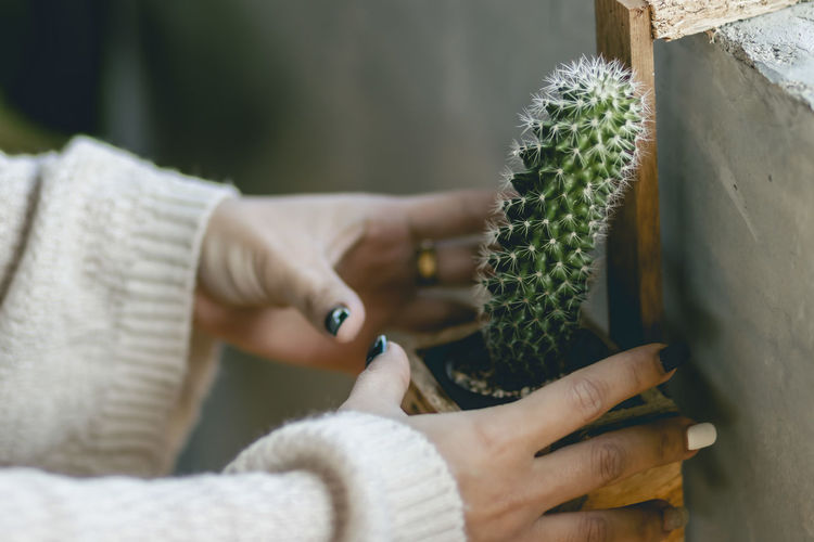 Close-up of hand holding cactus plant