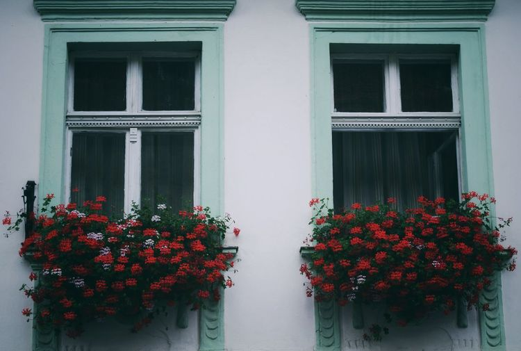 Red flowers on window of building
