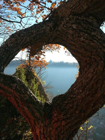 Nature Taking Photos Sunny Day Naturebeauty Naturelovers Fall Hikingadventures Hiking Enjoying The View Swabian Alb Countryside Amazing View Castle Nofilter